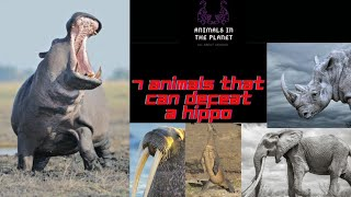7 Animals that can defeat the hippopotamus in tamil