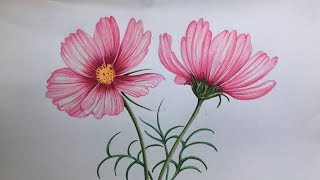 Cosmos Flowers Drawing In Color Pencils   How To Draw Flowers