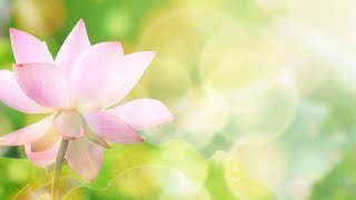 """Peaceful Music, Relaxing Music, Meditation Music , """"All Things Beautiful"""" by Tim Janis"""