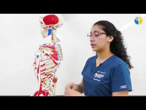 Articulațiile genunchiului doare când te ridici