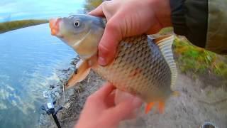 Осенняя рыбалка карп