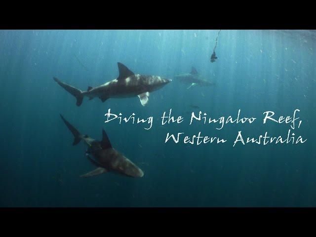 Diving the Ningaloo Reef, Western Australia