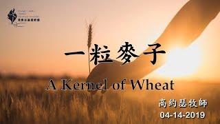 【04/14/2019 主日信息:一粒麥子 - 高約瑟牧師】