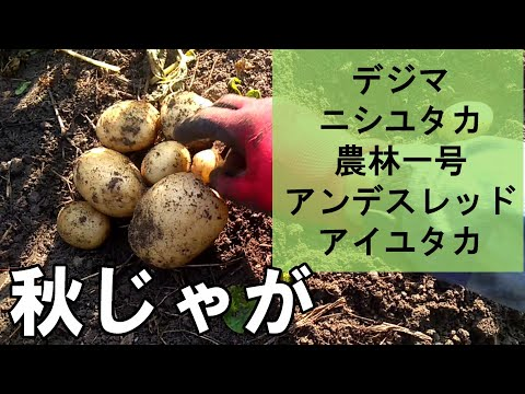 , title : '春ジャガ品種は多いのに秋ジャガ品種が少ないのはなぜ?