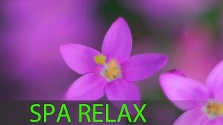6 Hour Relaxing Spa Music: Massage Music, Calming Music, Meditation Music, Relaxation Music ☯344