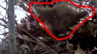 СТРАННОЕ СУЩЕСТВО ГОЛЛУМ НАПУГАЛ ОХОТНИКА В ЛЕСУ АЗЕРБАЙДЖАНЕ неизвестное существо в лесу. мистика