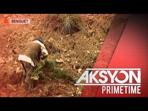 [News5]  Halaga ng napinsalang pananim na gulay ng bagyong Ompong sa Benguet, pumalo sa P181-M