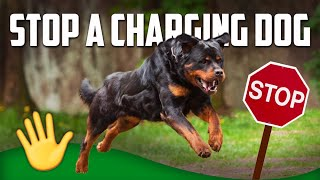 How to Stop a Charging Dog (MUST WATCH)