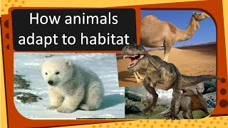 Science -Animal Adaptation -- Extinct And Endangered Animals - English