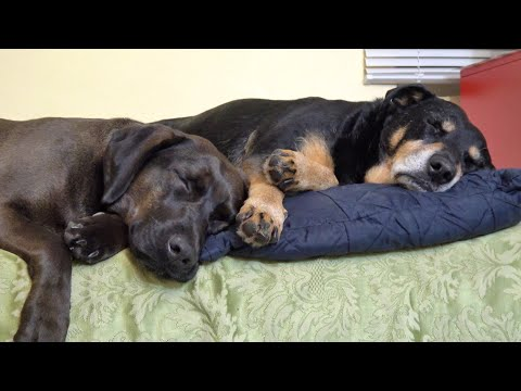 How Two Dogs Rescued From Sad Life Became Best Friends | Animal Friendship