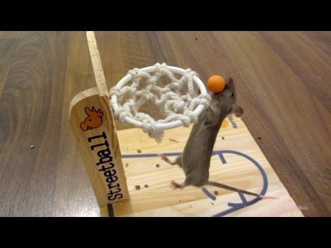 Mouse Basketball Tutorial Mp3