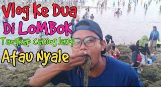 Tradisi Suku SASAK LOMBOK Bau Nyale Atau Cacing Laut