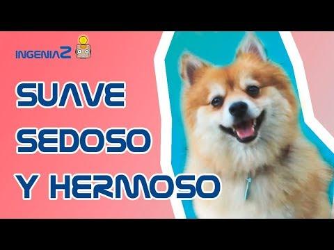 SUAVE, SEDOSO Y HERMOSO (Cepillo expulsapelo)