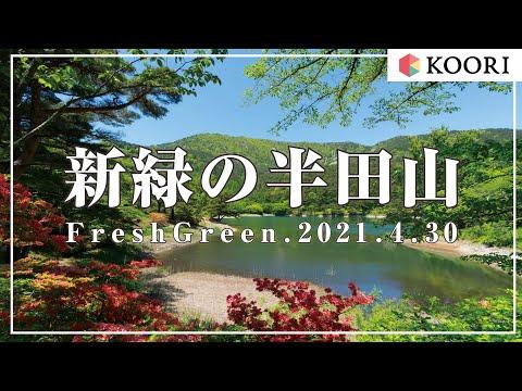 半田山自然公園の新緑【2021/4/30撮影】サムネイル