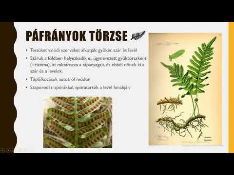 Szúnyogcsípés paraziták
