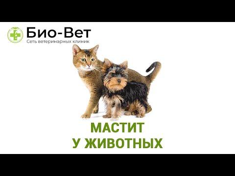 Мастит у животных. Ветеринарная клиника Био-Вет.