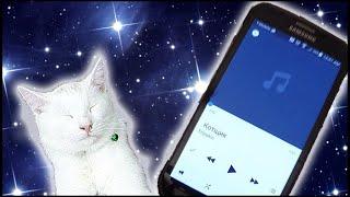 Реакция Кота на Песню Энджойкина (Enjoykin Котщик)