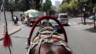 preview picture of video 'Horse Carriage'