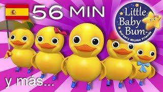 Contar cinco patitos | Y muchas más canciones infantiles | ¡56 min de recopilación LittleBabyBum!