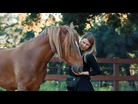 THE LIBERATED HORSE Online Course - YouTube