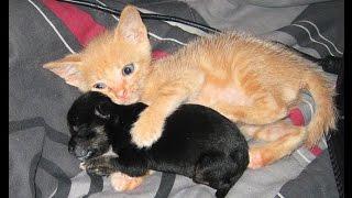 Прикольные и смешные котята.