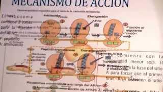 LINEZOLID. USO SEGURO DE ANTIBIOTICOS