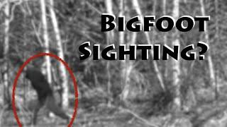 Remote Forest Boondocking & Bigfoot Sighting
