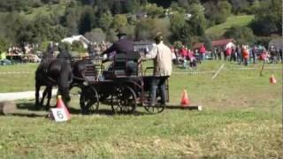 preview picture of video 'Oberkärntner Kutschenrallye in Treffling b. Seeboden 15.10.11'