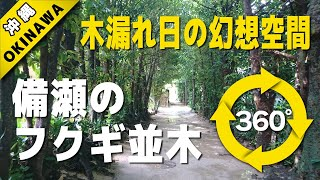VR動画で擬似体験-japan okinawa-備瀬のフクギ並木の動画