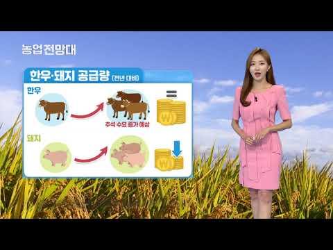 YTN 농업전망대(축산관측 8월) (2019.08.05) 이미지