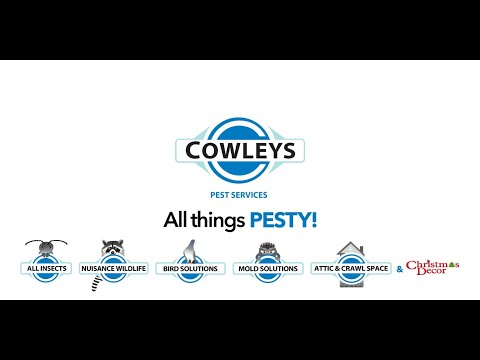 Cowleys Recruitment Video