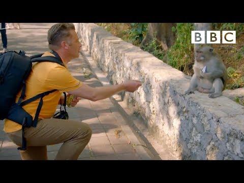 Proč opice okrádají turisty?
