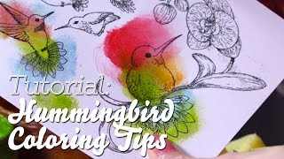How to Use Stamp Paint for EZ Coloring and Shimmer on Hummingbirds and Orchids