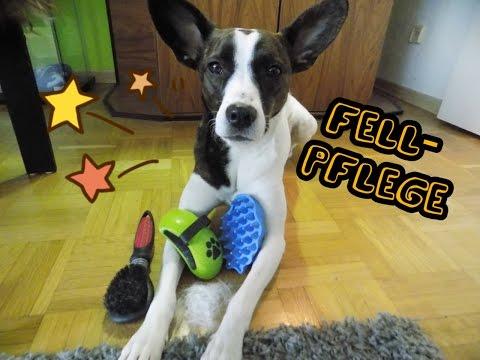 Fellpflege // Kurzhaarhund