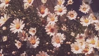 13 beaches - Lana del Rey    instrumental (slowed down)