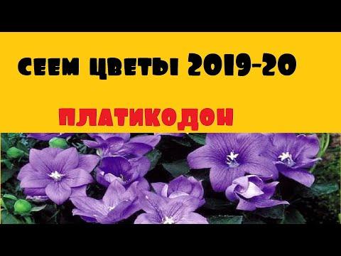 Сеем цветы! Декабрь 2019. Посев платикодона.