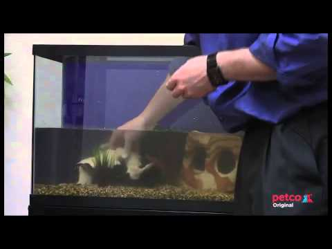 How to Set Up a Freshwater Aquarium (Petco)