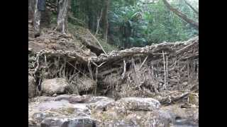 preview picture of video 'Living Root Bridge, Meghalaya, India'