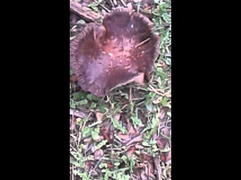 Tipi di un fungo che sta a bambini di una fotografia