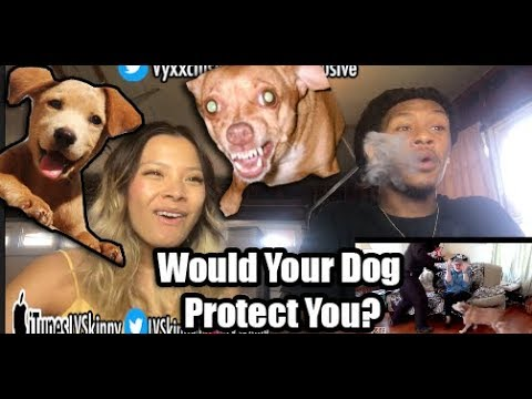 Dogs Tested to See Whether They'd Defend Owner During Home Invasion (Reaction Video)