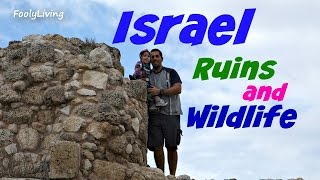 ISRAEL RUINS AND WILDLIFE - November 22, 2014 - FoolyLiving Vlog