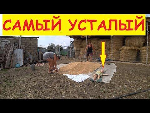Что растёт на втором участке? Закрываем компот / Варим варенье / Семья в деревне