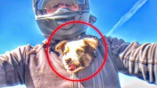 TOP 5 Animal Rescues by Bikers 2019