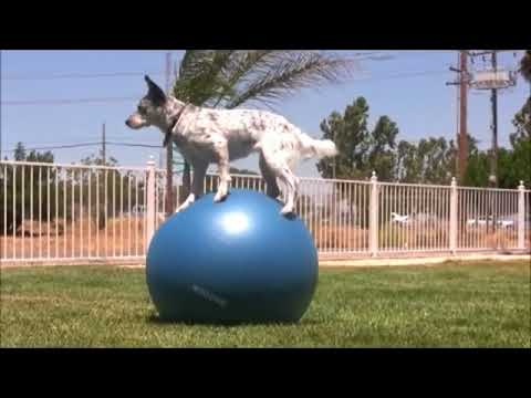 funny – dog – compilation – best – pets – agility – amazing – dogs – talent – canine – tricks – 2014