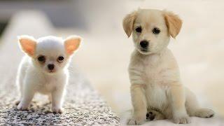 Раз собака, два собака... Веселый клип про собак - детская песня! /Лансере/ Dog... children's song!
