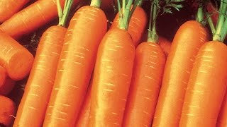 How to Plant and Grow Carrots