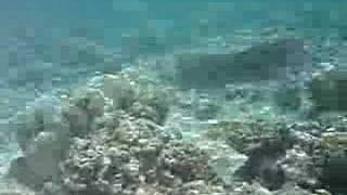 preview picture of video 'Ouvea Atoll underwater 1 - New Caledonia'