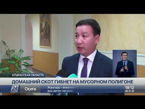 , title : 'Домашний скот гибнет на мусорном полигоне  в Атырауской области