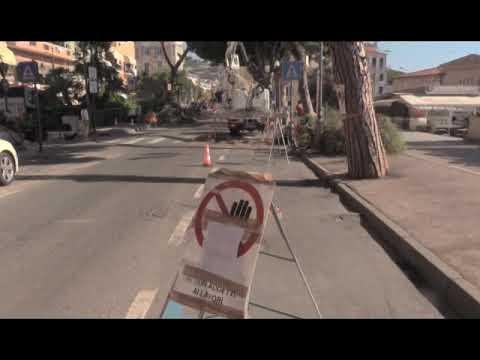 SANREMO :  MONITORAGGIO E POTATURA DELLE PIANTE