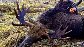 Охота на лося. ПОПАДАНИЕ в кадре!!! My Best Moose Hunting.